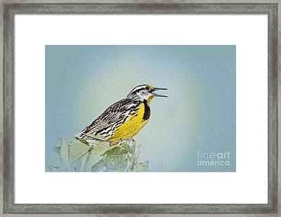 Western Meadowlark Framed Print by Betty LaRue