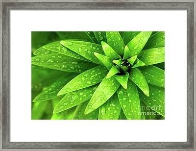 Wet Foliage Framed Print by Carlos Caetano