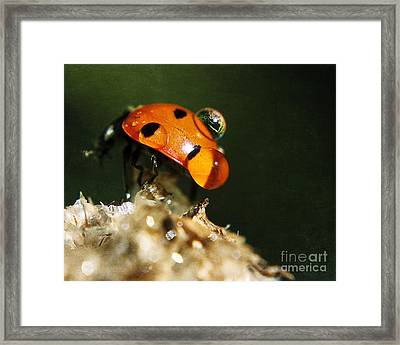 Wet Lady Bug Framed Print by Billie-Jo Miller