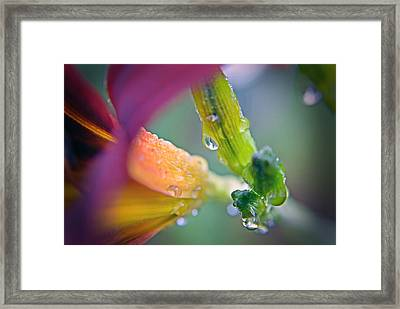 Framed Print featuring the photograph Wet Lily by Susan Leggett
