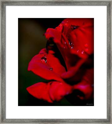 Framed Print featuring the photograph Wet by Marija Djedovic