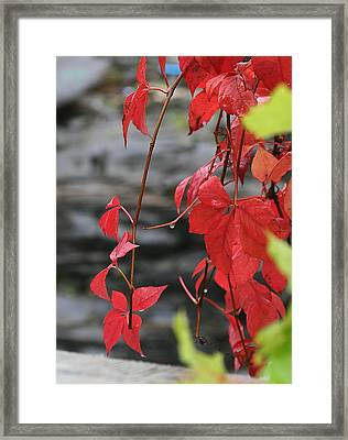 Wet Reds Framed Print