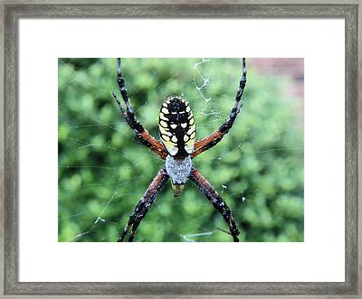 Framed Print featuring the photograph Wet Writing Spider by Chad and Stacey Hall