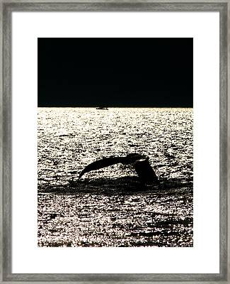 Whale In Sunset Framed Print by Paul Ge