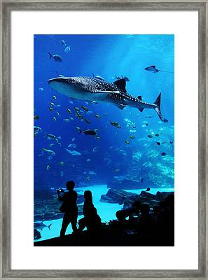 Whale Shark Fly-by Framed Print by Brian M Lumley