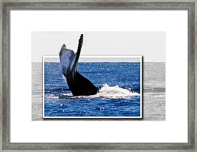 Whale Tail Framed Print by Jean Noren