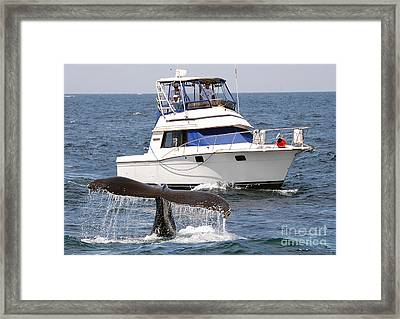 Whale Watching Framed Print by Jim Chamberlain