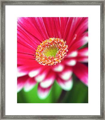 What A Daisy Framed Print by Kathy Yates