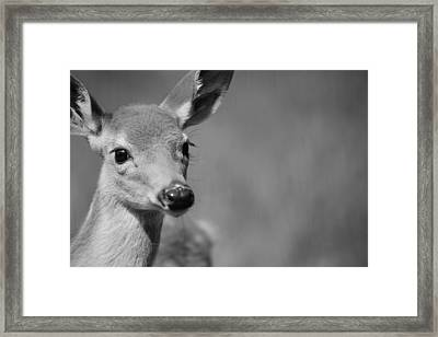 What A Face Framed Print by Karol Livote