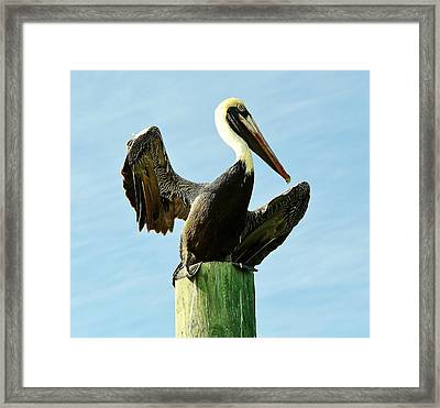 What A Poser Framed Print by Paulette Thomas