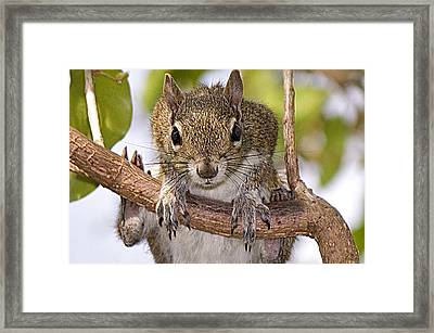 Framed Print featuring the photograph What A Predicament This Is by Anne Rodkin