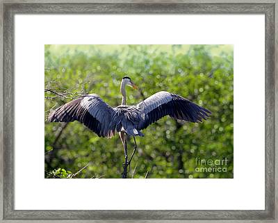 What A Wingspan Framed Print