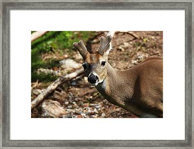 What Are You Looking At Framed Print by Ricky Barnard