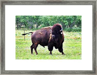 What Did You Say Framed Print by Monica Wheelus