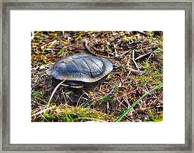 What Do You Want Now Framed Print by Joanne Kocwin