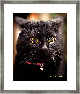 What Does Neuter Mean Framed Print by Tom Buchanan