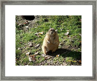 What I'm Not Fat Framed Print by Margaret Buchanan
