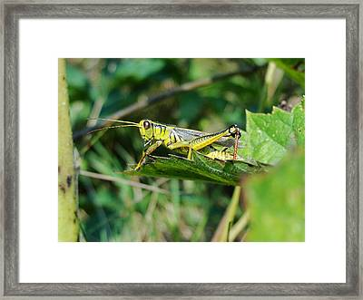 What Is Beneath Our Feet Framed Print by Katie Bauer
