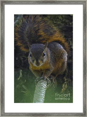 What Is Going On Up There Framed Print by Heiko Koehrer-Wagner