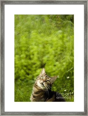 What Is Up There Framed Print by Angel  Tarantella