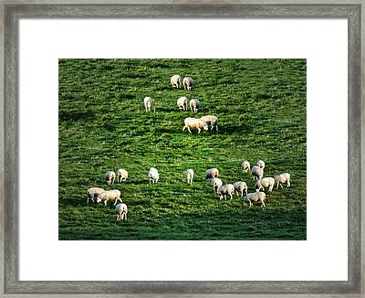 What The Flock Framed Print by Bill Cannon