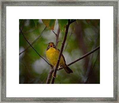 What Warblers Do Framed Print