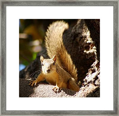 What You Are Watching Here Framed Print by Meeli Sonn