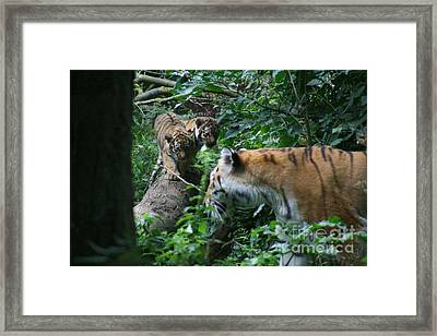 What You Doing Framed Print by Carol Wright