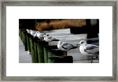 whata YOU lookin at Framed Print