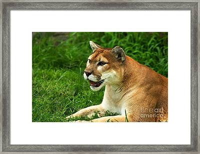 Framed Print featuring the photograph Whatcha Looking At by Julie Clements