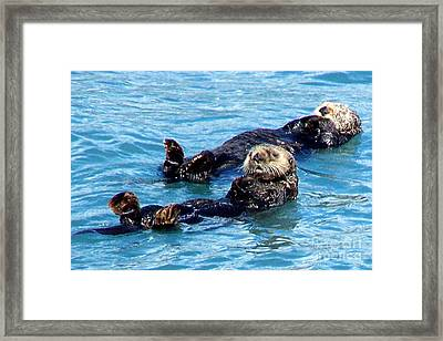 Framed Print featuring the photograph Whatchu Looking At by Kathy  White