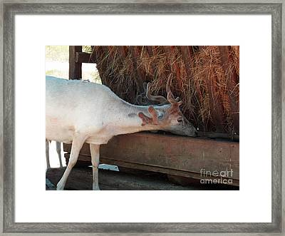 What's For Lunch Framed Print by Methune Hively