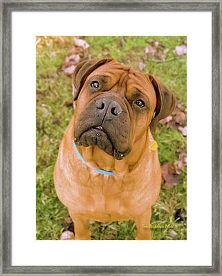 What's In Your Pocket Framed Print by Tom Buchanan