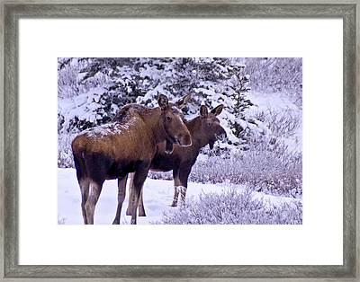 Whats That Mom Framed Print by Jim and Kim Shivers