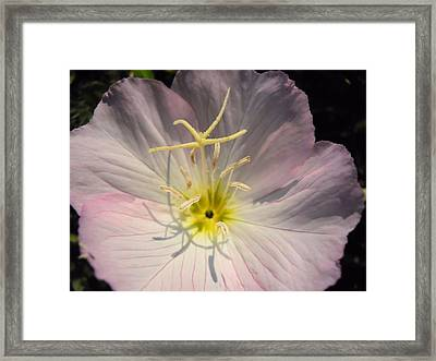 What's Up Buttercup Framed Print by Lynnette Johns
