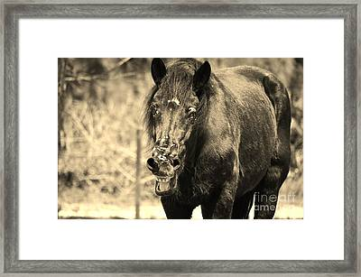 What's Wrong With My Face Framed Print by Lynda Dawson-Youngclaus
