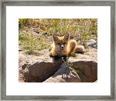 Whats Ya Doing Framed Print by Darren Langlois