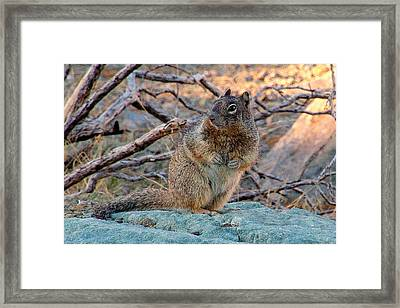 What's Yer Hurry.. Framed Print by Al  Swasey