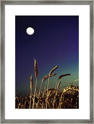 Wheat Field At Night Under The Moon Framed Print by The Irish Image Collection