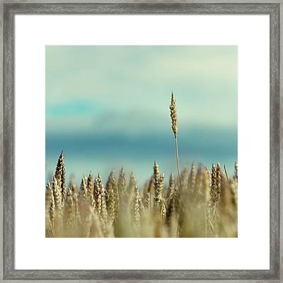 Wheat Field In Spain Framed Print