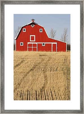 Wheat Fields And A Red Barn Framed Print by Pete Ryan