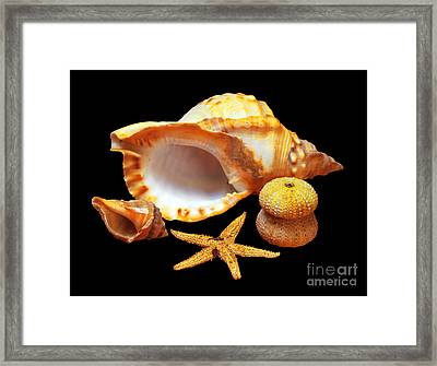 Whelk Framed Print by Carlos Caetano