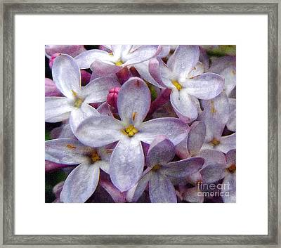 When Lilacs Last In The Dooryard Bloom'd Framed Print by Janeen Wassink Searles