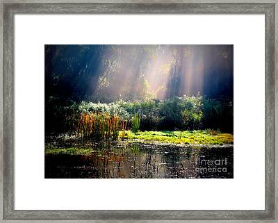 When Morning Hits The Marsh Framed Print by Carol Groenen