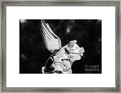 When Pigs Land Framed Print