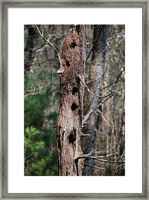 When Woodpeckers Attack Framed Print by Carrie Munoz