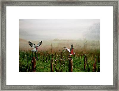 Where Are The Grapes Framed Print