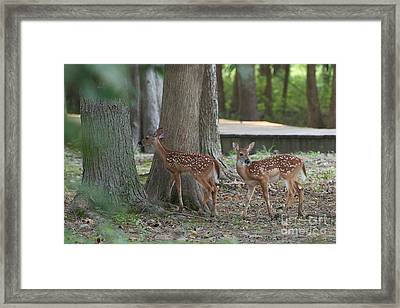 Where Are We Going? Framed Print by Miguel Celis
