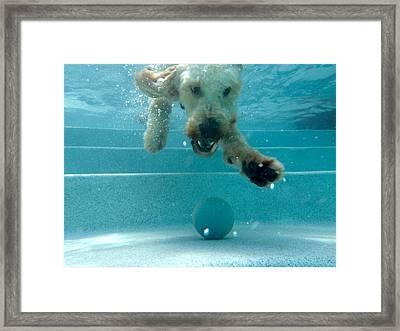Where Is My Ball Framed Print by Juan Pisani
