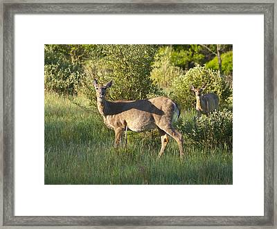 Where Is The Maternity Ward 5969 Framed Print by Michael Peychich
